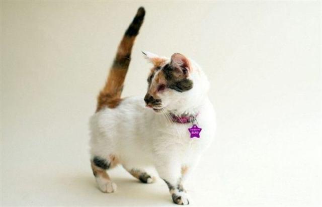Фотограф публикует снимки безглазых кошек в надежде, что они найдут новых хозяев