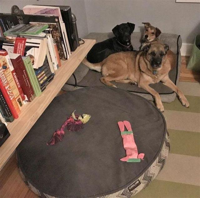 Даже остальные собаки считают, что эти псы ведет себя странно