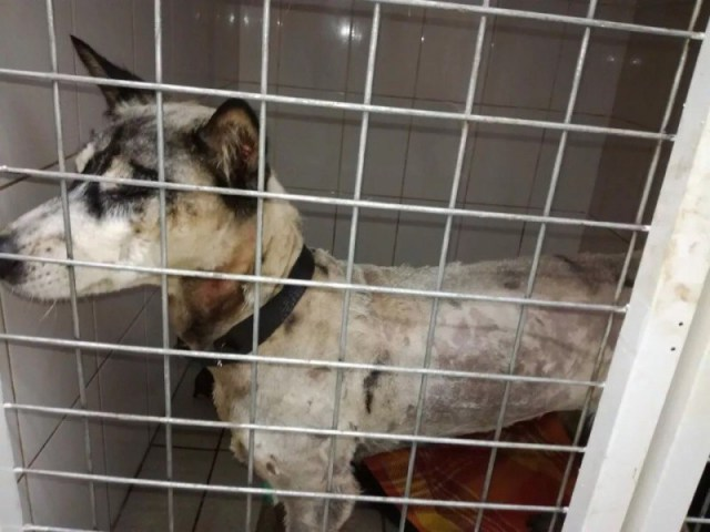 Неравнодушные люди спасли собаку, застрявшую в битуме