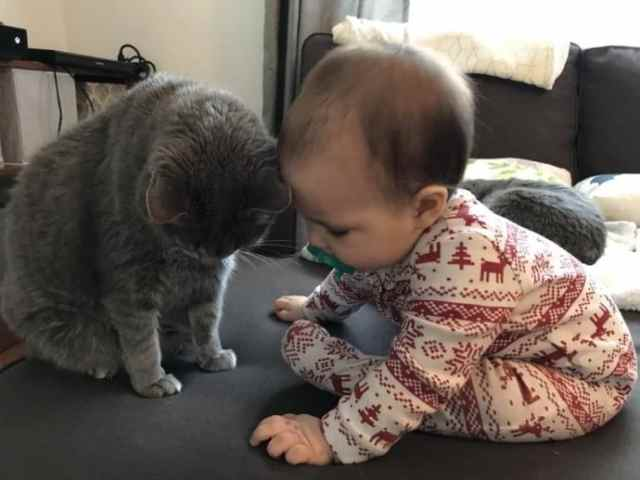 Эмоциональные фото, которые докажут, что коты тоже могут быть хорошими питомцами