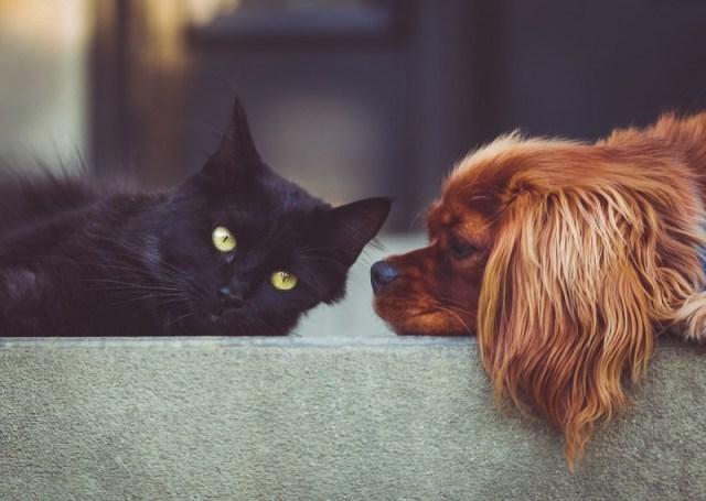 Ученые установили, что собаки в два раза умнее кошек