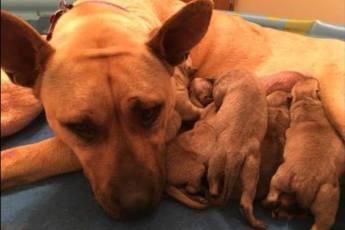 Мужчина, спасая от усыпления собаку, на самом деле спас еще шесть щенков