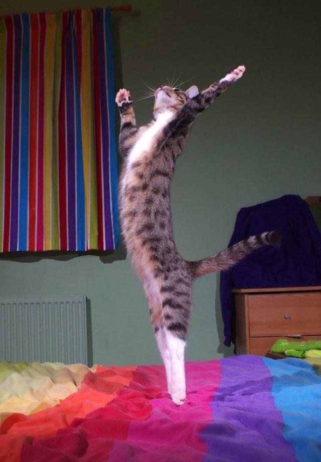 Забавные танцующие котики для отличного настроения