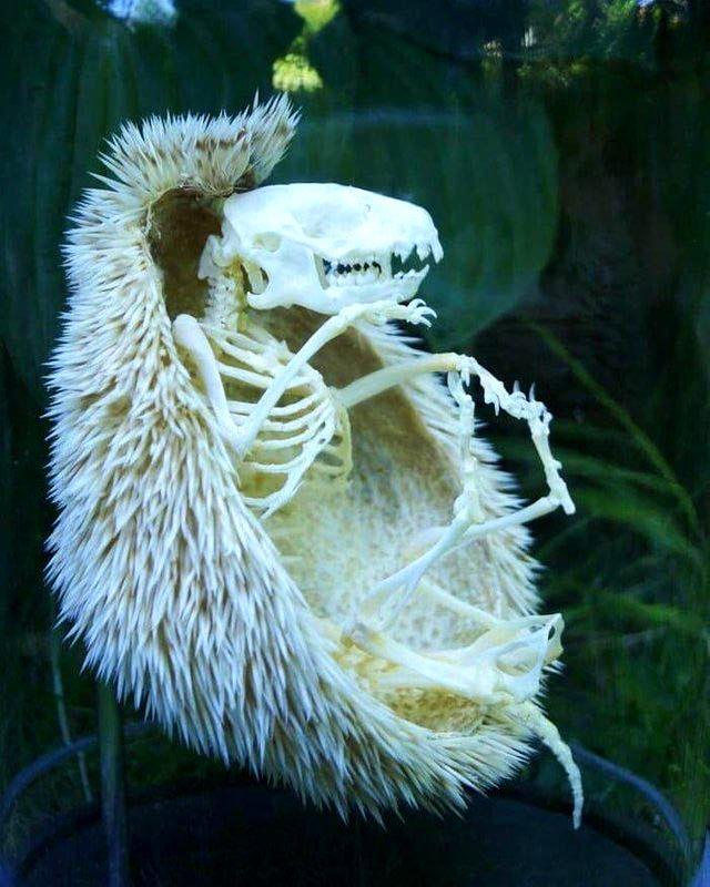 15 удивительных фото природы, которые заставят вас сказать ВАУ