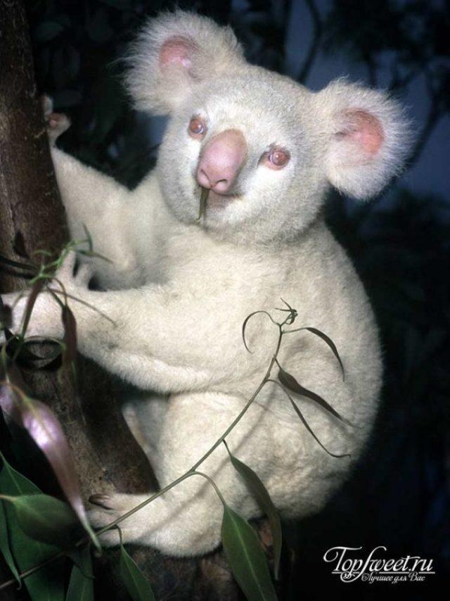 Фантастические животные-альбиносы: редкие, беззащитные и великолепные