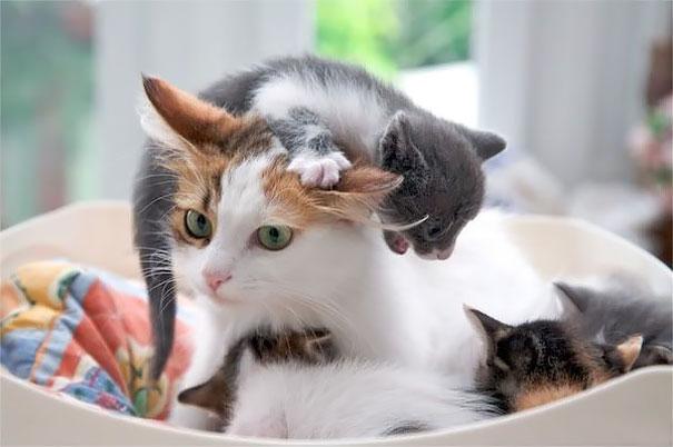 Уставшие мамочки. Вся правда о материнстве на примере животных
