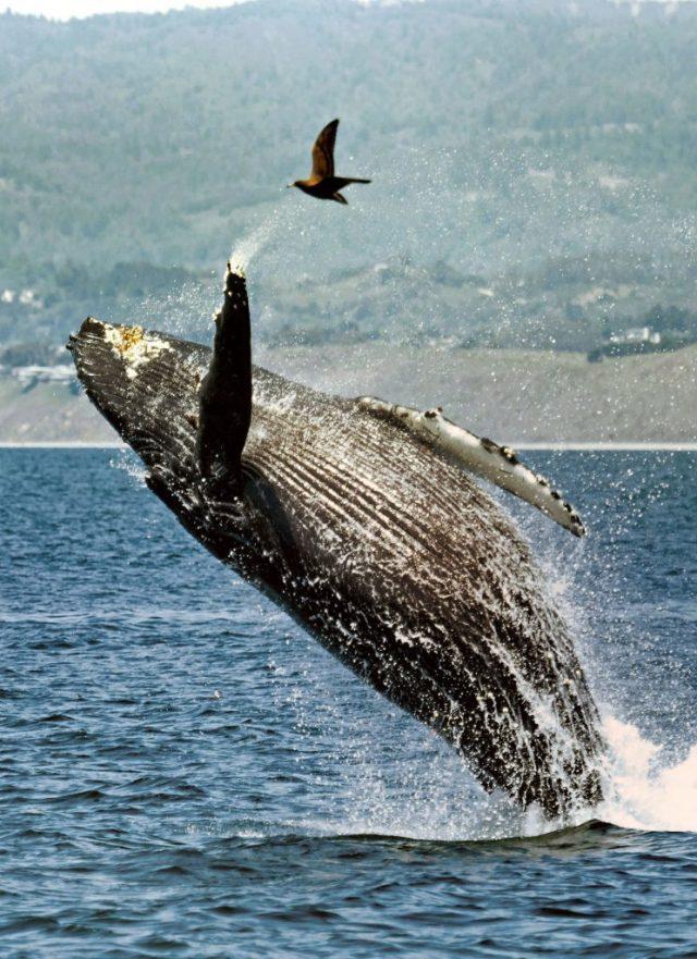 10 забавных фото животных, в самый важный момент