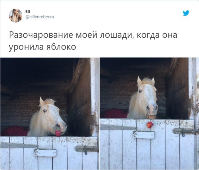 """""""Любимые пакостники"""": Фотографии, которые докажут, что мы можем простить животным все"""
