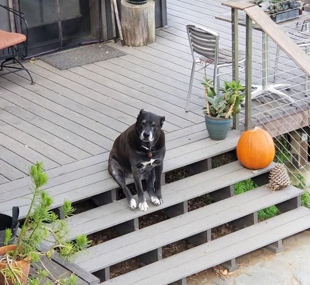 15 смешных песиков, которые совершенно не умеют быть собакой
