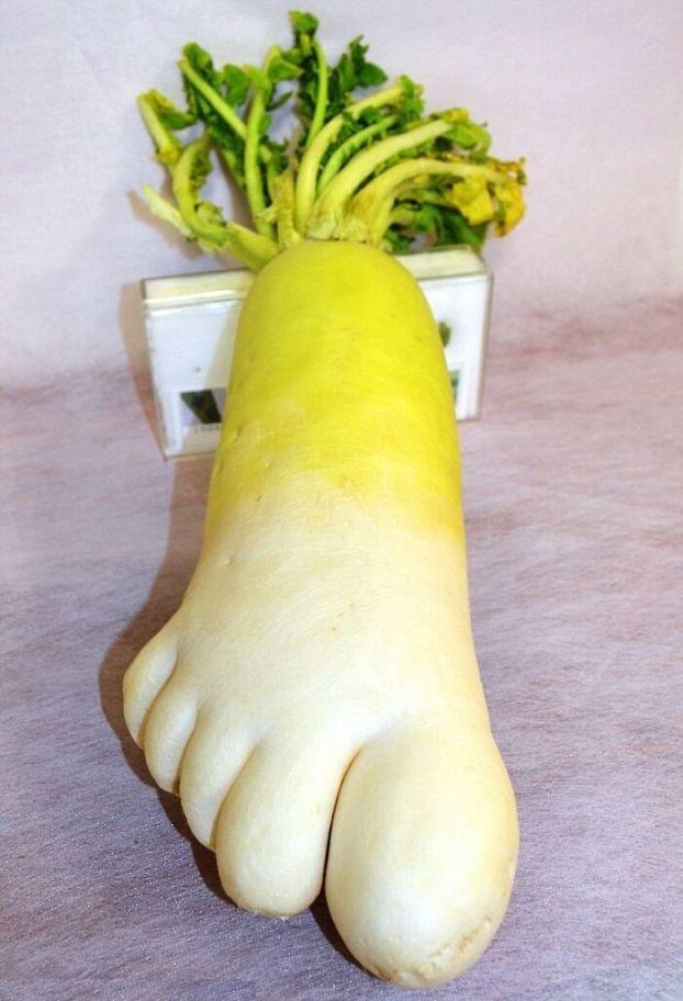 Что за явления? Овощи и фрукты, которые уродились в нестандартной форме