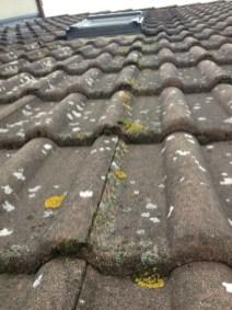 Diverses contaminations Lichens, mousses, ver de gris,
