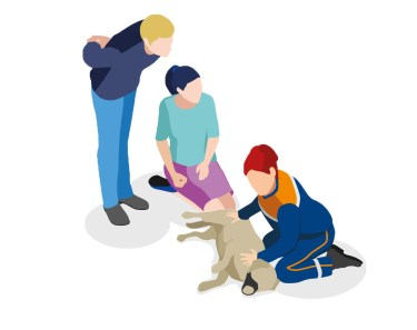 premiers secours canins chiens