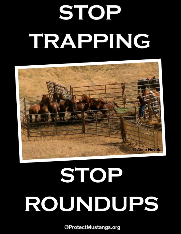 Permission given to use to raise awareness crediting © Protect Mustangs