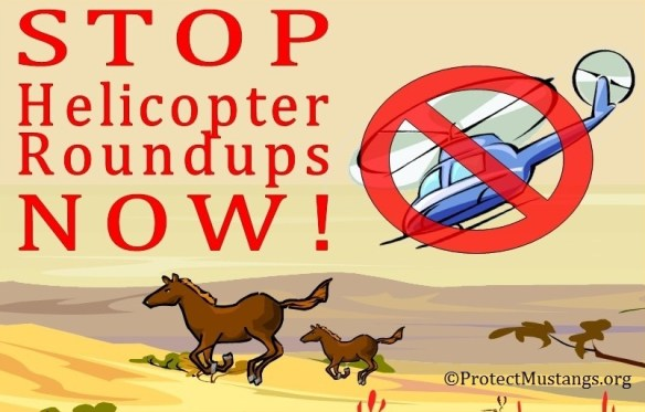 © ProtectMustangs.org may be shared