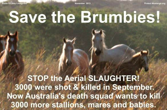 Save the Brumbies