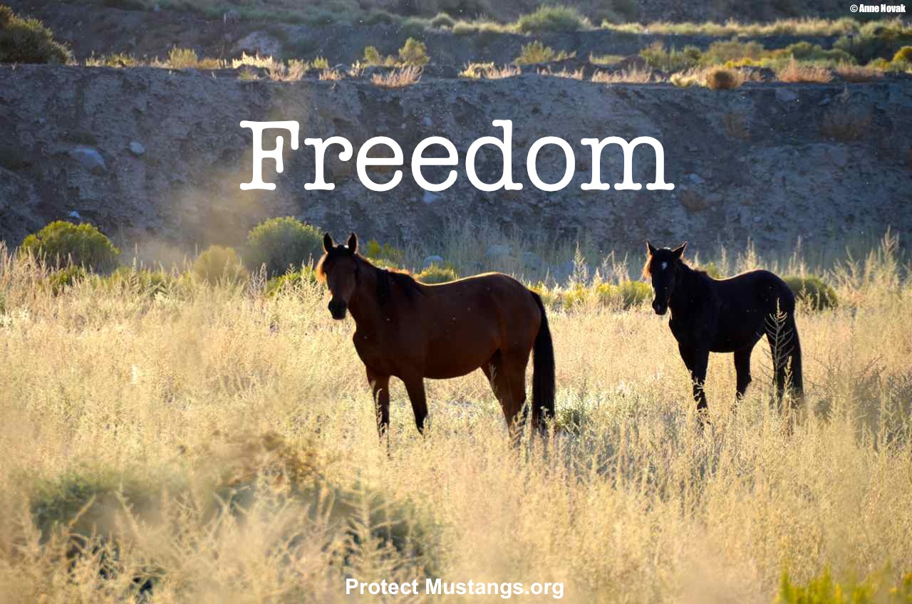 Petitions | Protect Mustangs™