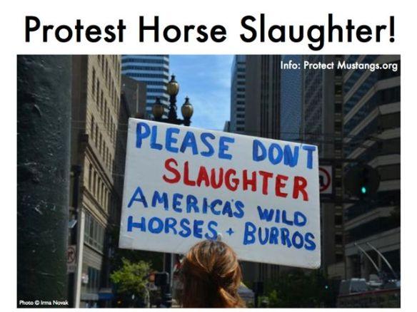 Protest Horse Slaughter Med