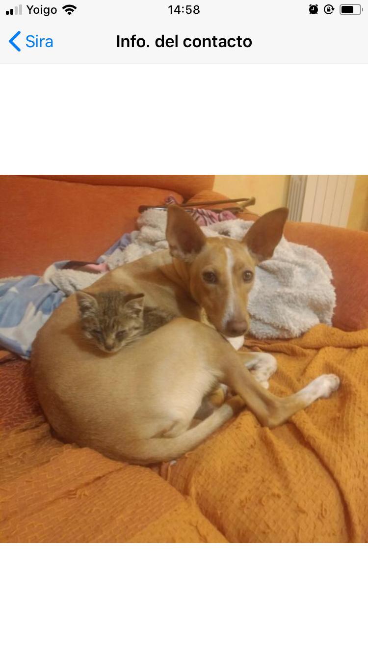 OLI CACHORRO EN ADOPCIÓN PROTECTORA DE ANIMALES DE JACA 25123 DIC/19