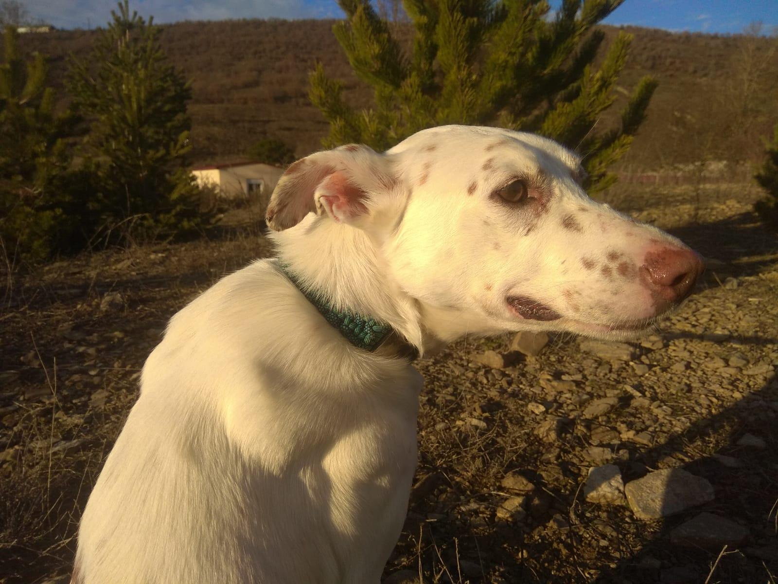 PALOMO DIC19 perro en adopción en la protectora de Jaca APA Pirineos 14121109