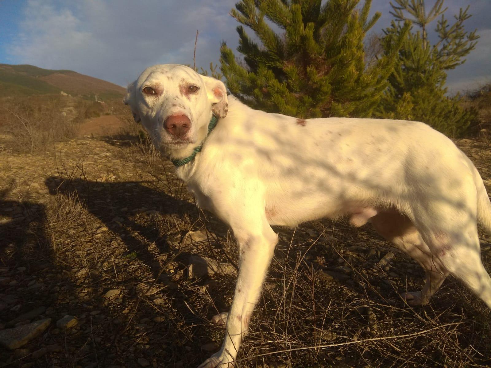 PALOMO DIC19 perro en adopción en la protectora de Jaca APA Pirineos 1