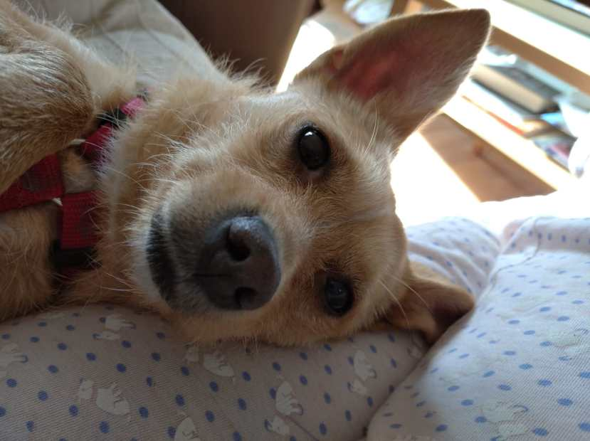 Cloe dic19 h perro en adopción en la protectora de animales de jaca 234