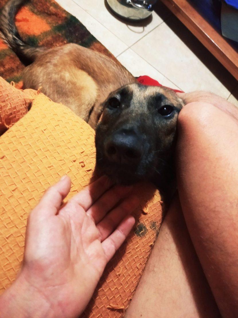 carlo perro en adopcion en la protectora de animales de jaca nov20