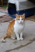 Ginger1-2