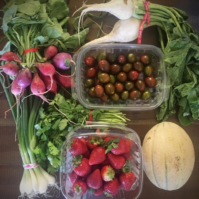 CSA Bag Number 3: Tomatoes, Radishes, Strawberries, Cantaloupe, Cilantro, Turnips, Green Onions