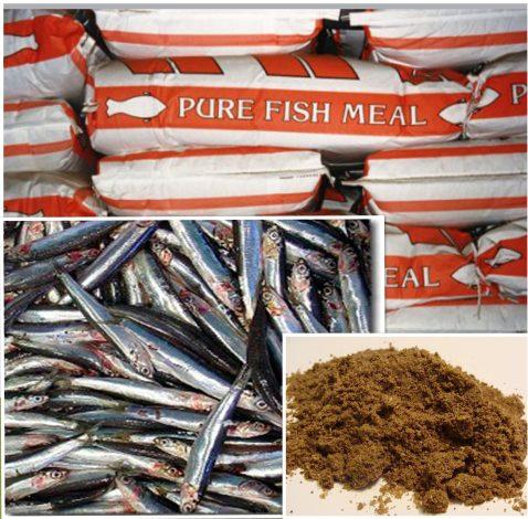 fishmealcollage