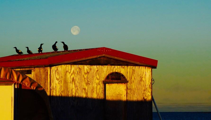 Field camp cabin in remote Arctic Cooper Island.