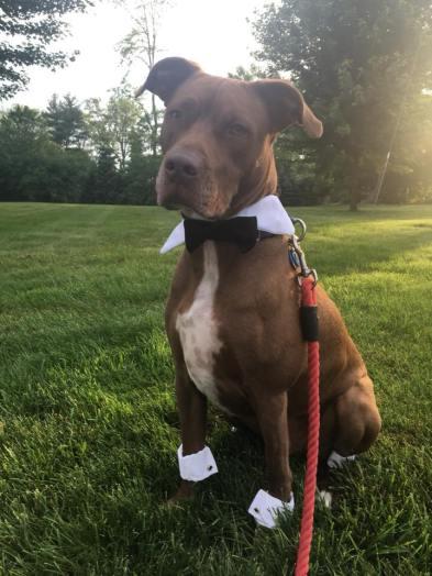 natasha 1 dog