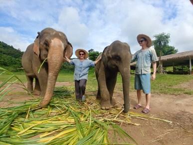 Elephants - Between.jpg