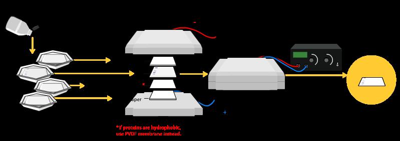 Gel Electrophoresis Process Furthermore Gel Electrophoresis Diagram