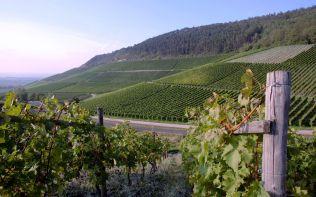 Weinanbau, Deutschland (Germany, Vineyards)