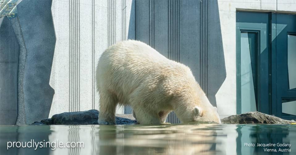 proudlysingle-blog-feed-feedburner-test-photo-of-polar-bear-fishing-by-jacqueline-godany-vienna-austria