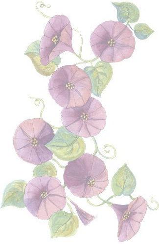 Above Rubies - flowers