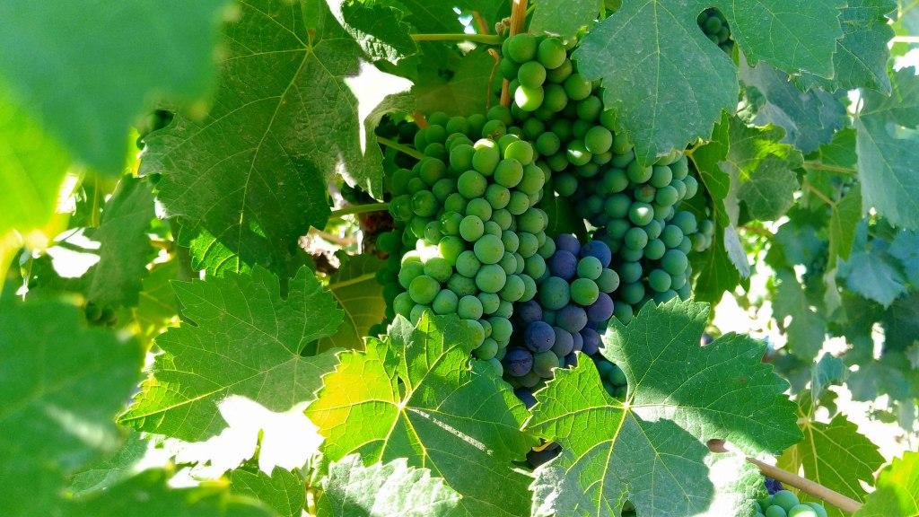 dicas de viagem para amantes de vinho