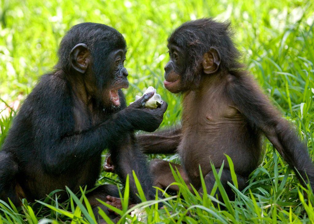 Nuevo estudio indica que los animales se comunican como los humanos  Proveg Espaa