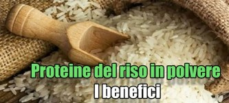 Proteine del riso in polvere
