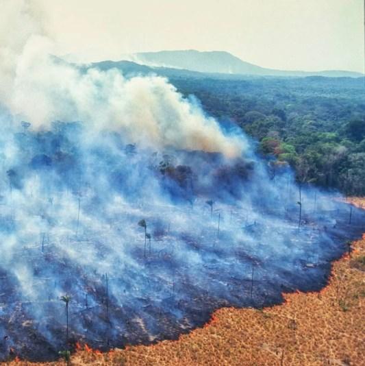 La foresta amazzonica brucia per la carne