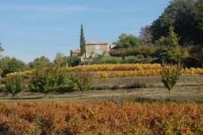 Vignoble en automne. Luberon. Bonnieux (Vaucluse).