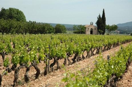 Vignoble devant la chapelle Saint-Pancrace, à Puyloubier (Bouches-du-Rhône).