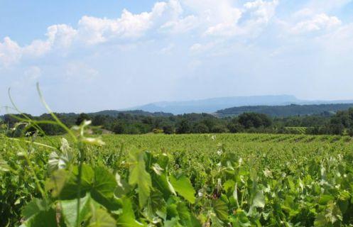 Cucuron vineyard