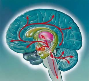 международные эксперты исследование в области нейропсихологии и психофизиологии