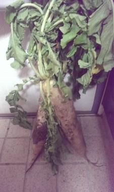 野菜を隣のお家から貰いました