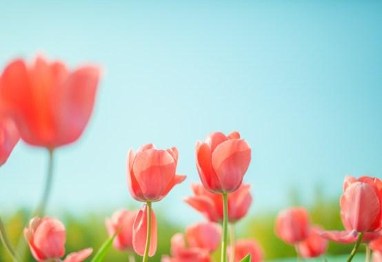 花のしるし―詩