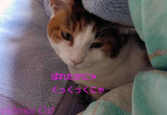 摂理猫20150312