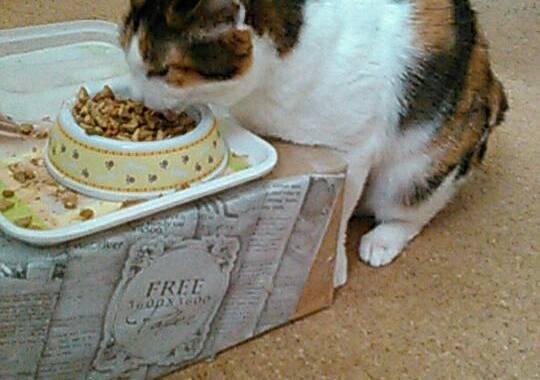 摂理猫家庭局にお世話になる1