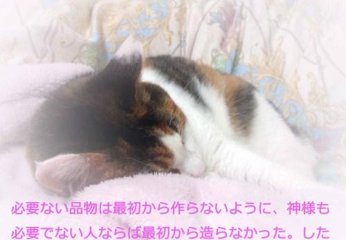 摂理猫の箴言御言葉