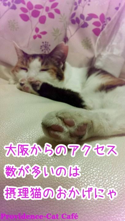 摂理猫様、大阪からのアクセスの多さにご満悦